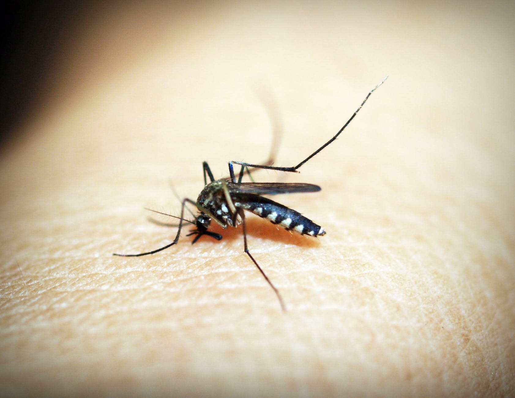 Don't let summer bugs get you down. Read on to learn more about how to prevent bug bites this summer!